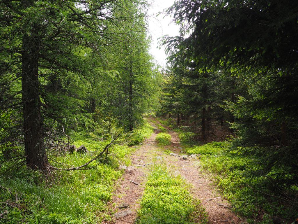 Wydeptana szeroka ścieżka na Łysiec (lepsza opcja ;))
