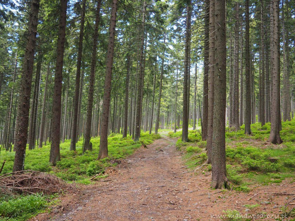 Lasem w stronę Karlova pod Pradadem