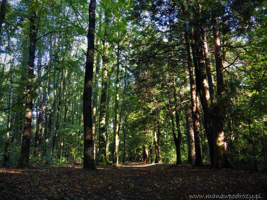 Na jednej ze ścieżek Parku w Lipnie