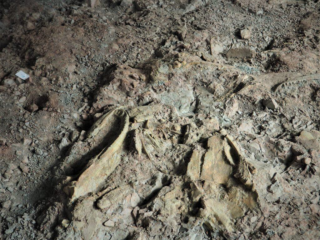 """Skamieniałości w Pawilonie Paleontologicznym możemy wypatrzeć """"gołym okiem"""""""