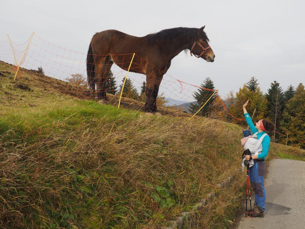 W okolicach szczytu Cienkowa można spotkać konie