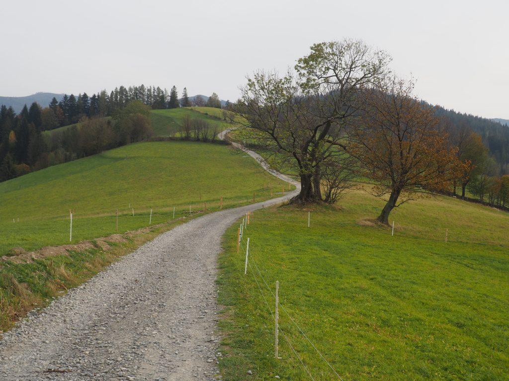 Droga wiodąca przez Cienków