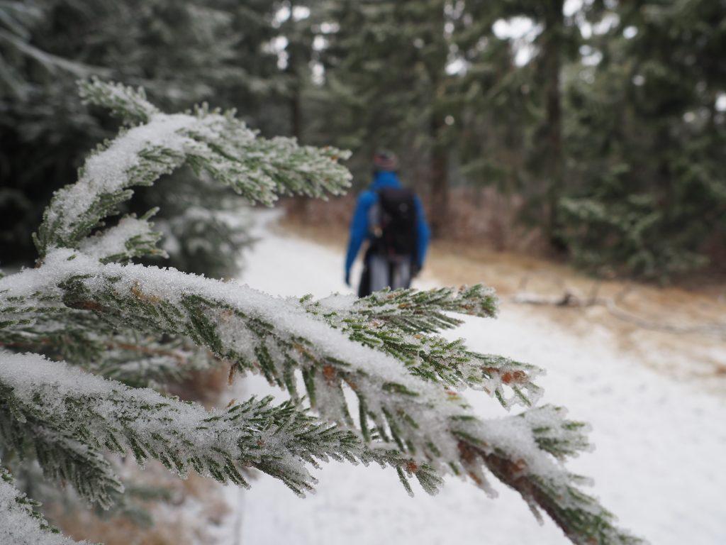 Leśna ścieżka na Orlicę