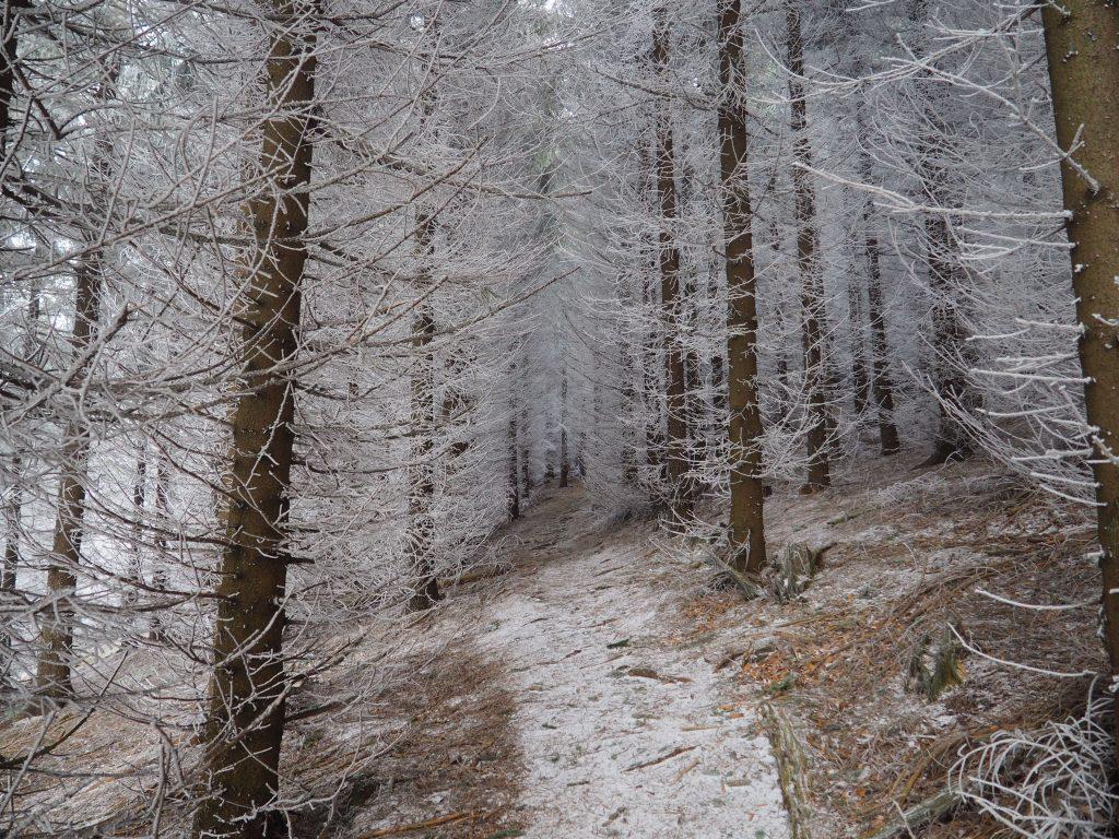 Krajobraz niczym z Opowieści z Narni