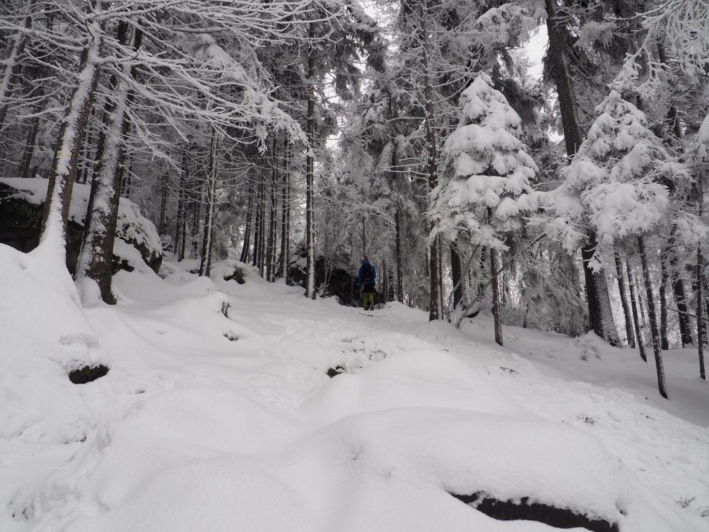 Na żółtym szlaku w kierunku Przełęczy między Szczelińcami