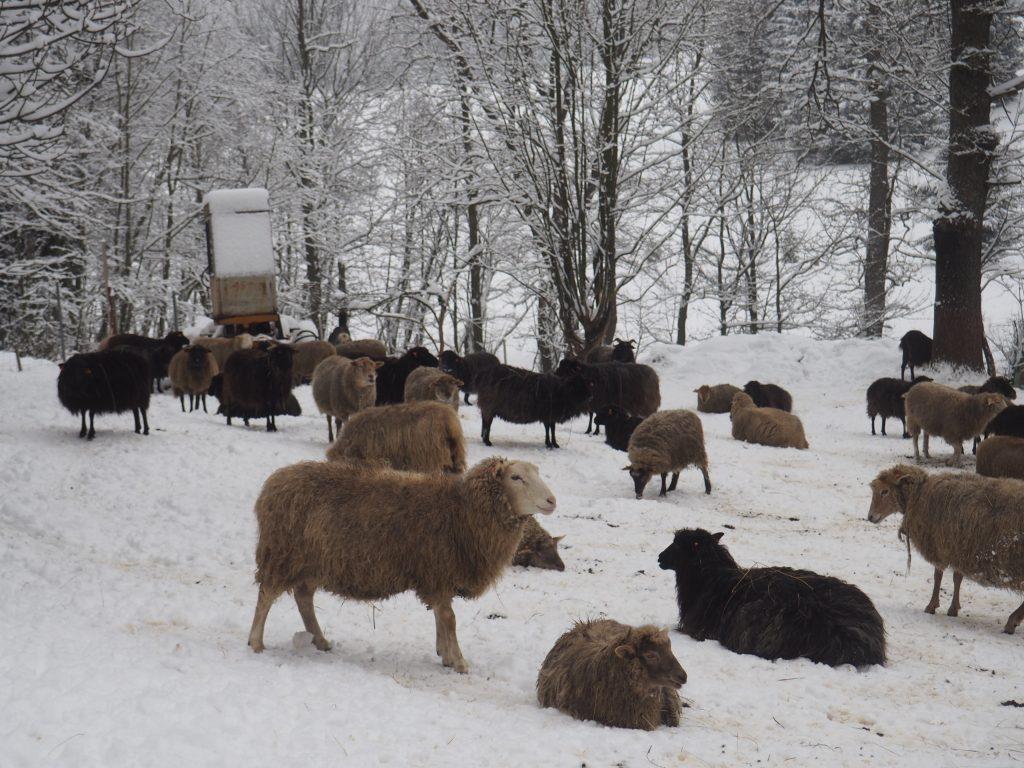 ... a także owieczki:)