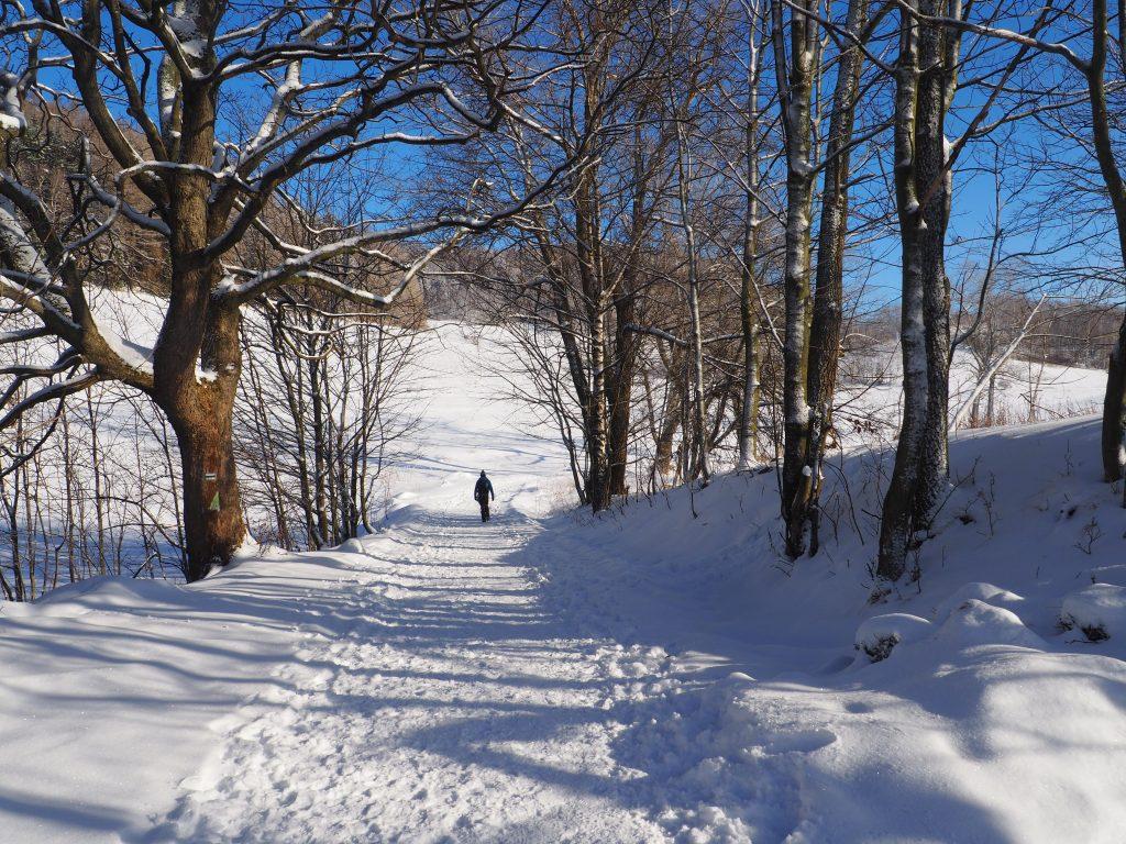Zielony szlak na Chełmiec to bardzo przyjemna ścieżka