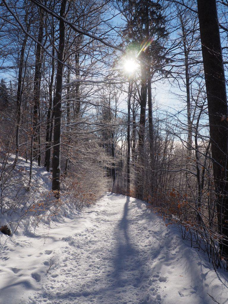 Zielony szlak w pięknej zimowej scenerii