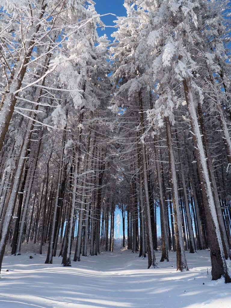Malowniczy las w pobliżu Przełęczy pod Trzeboniem