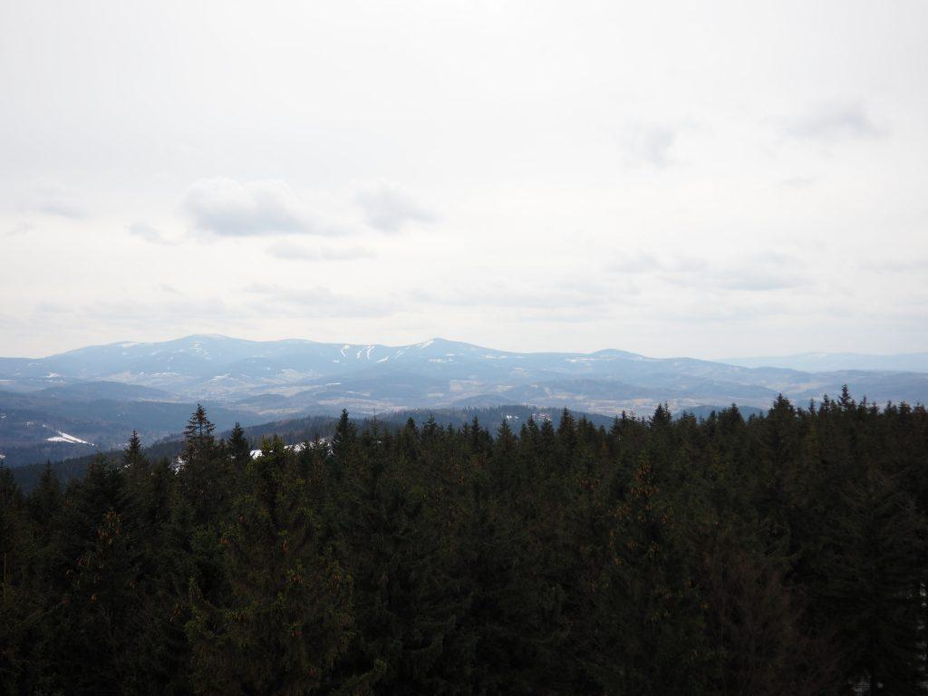 Widok z wieży na Borówkowej w kierunku Masywu Śnieżnika