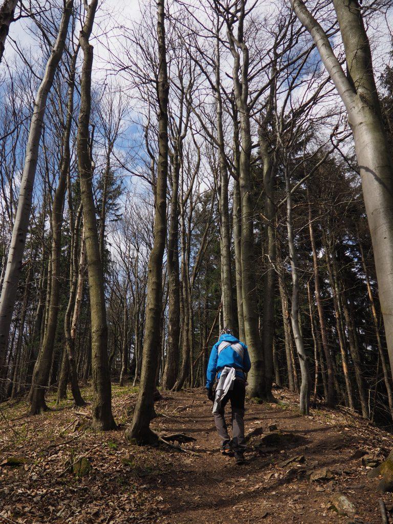 Na zielonym szlaku w kierunku Borowej