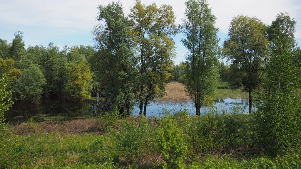 W okolicach Siestrzechowic warto pozachwycać się nad przyrodą;)