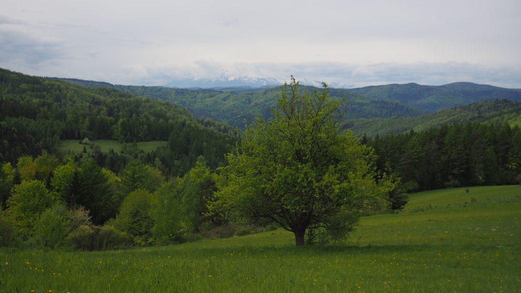 Widok na Tatry z polany pod Pustą Wielką