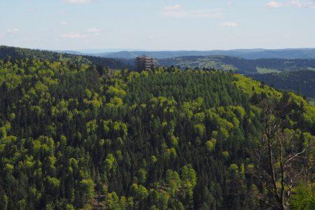 Wieża widokowa w Krynicy-Zdroj na szczycie stacji narciarskiej Słotwiny