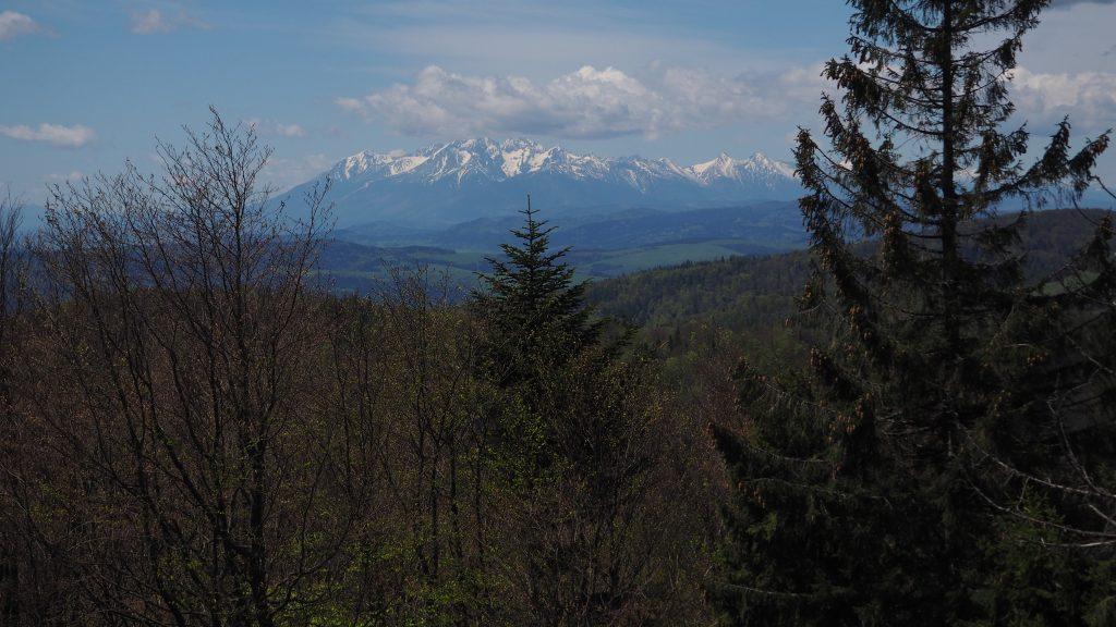 Widok na Tatry ze szczytu Jaworzyny Krynickiej