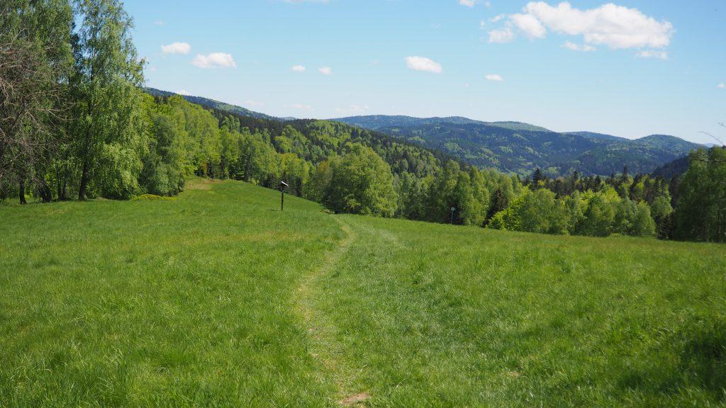 Zejście do Czarnego Potoku prowadzi malowniczymi ścieżkami
