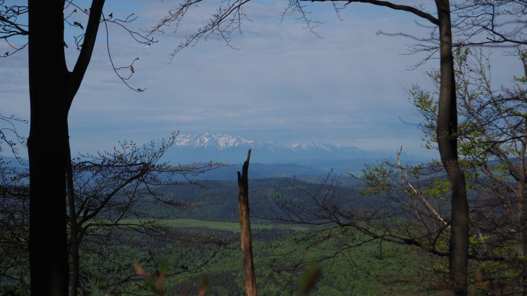 Widok na Tatry za drzewami