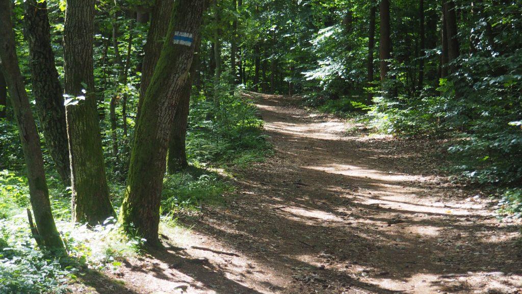 Najkrótszy szlak na Rowokół znakowany jest na niebiesko